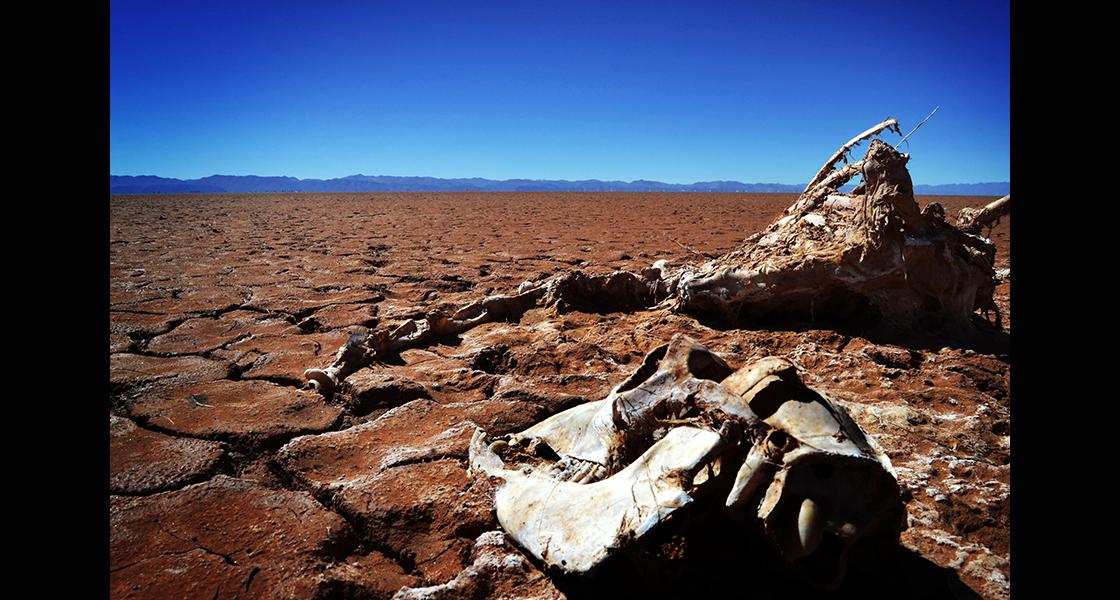 El lago tiene ciclo de vida. Pero esta vez desapareció, el cambio climático aceleró el proceso. La fauna y la flora son indicadores. Ni ellos pudieron calcular el tiempo y darse cuenta de que el lago desaparecía.